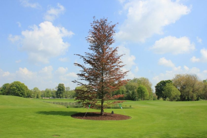 Trees for Golf Courses