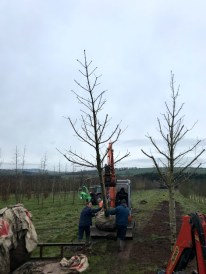 Transplanting Trees