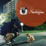 headerimg_nanstagram400