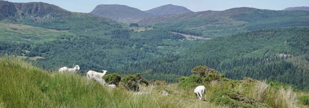 The Rhinogs Coming Into View