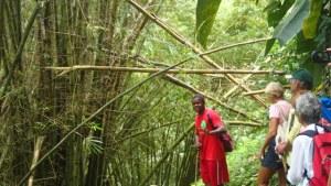 Vår guide berättar om bambuns växtrkraft