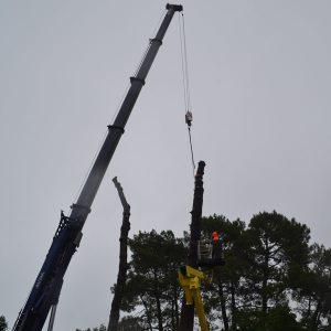 Abattage par démontage à la nacelle et grue en Pyrénées Atlantique 64 et Landes 40 990 - ECHEGARAY Ñaño élagage