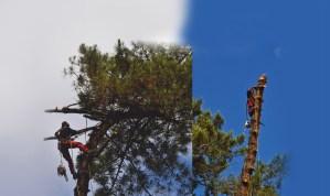 Equipes ECHEGARAY Ñaño élagage abattage image de fond Spécialiste des grands arbres