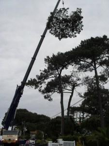 Abattage par démontage à la nacelle et grue en Pyrénées Atlantique 64 et Landes 40 4181 - ECHEGARAY Ñaño élagage