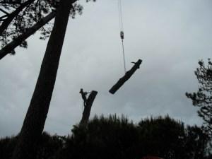 Abattage par démontage à la nacelle et grue en Pyrénées Atlantique 64 et Landes 40 4194 - ECHEGARAY Ñaño élagage