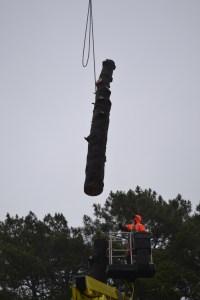 Abattage par démontage à la nacelle et grue en Pyrénées Atlantique 64 et Landes 40 992-2 - ECHEGARAY Ñaño élagage