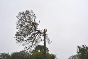 Abattage par démontage sur corde en Pyrénées Atlantique 64 et Landes 40 29-2 - ECHEGARAY Ñaño élagage
