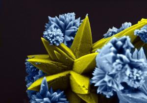 Rorivaldo Camargo - Sea Coral (Strontium Molybdate)