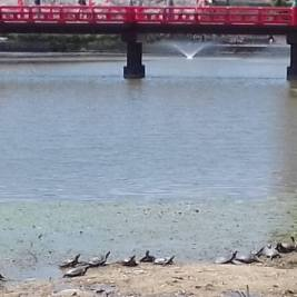 Turtles in Tennoji