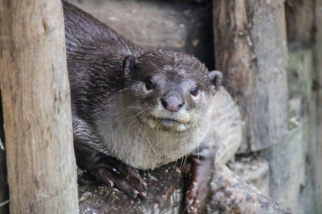 Otterly Crazy