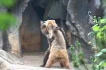 BEAR FIGHT!
