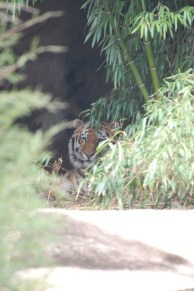 Outstretched Nanu, Hidden Tiger