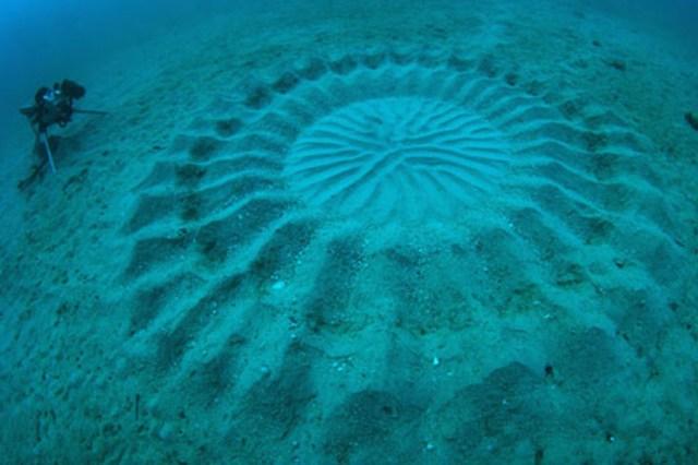Тайна рисунков на дне моря раскрыта