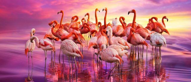 Грациозные фламинго