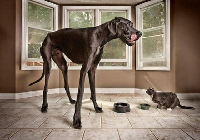 big_dog_funny_animal_photos_29_605
