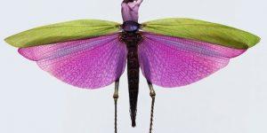 Женщины-насекомые