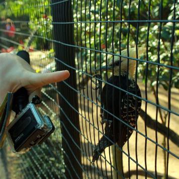 foz_do_iguacu_parque_das_aves_pica_pau