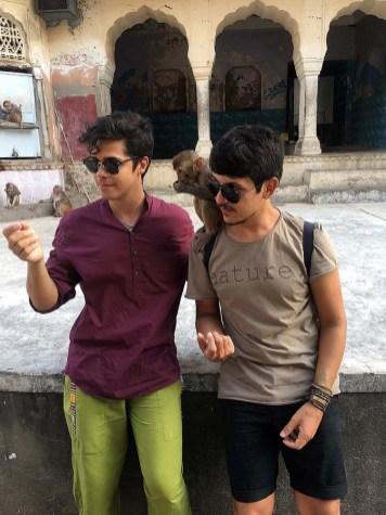 india_jaipur_monkey_temple_nao_e_caro_templo_dos_macacos_alimentando