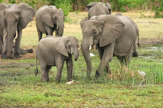 Foto elefantes Safári África do Sul.