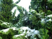 Árvores congeladas...