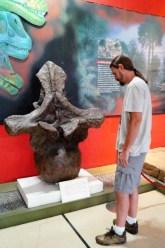 Sim, isso é uma vértebra de dinossauro!