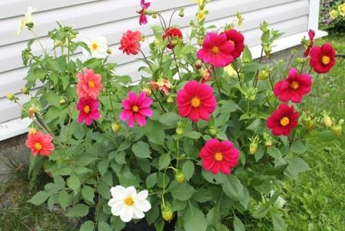 дружные ребята цветы