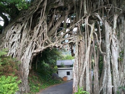 Banyan tree gate