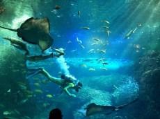 Sagami Bay Zone Aquarium