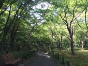 Walking path at Kitanomaru Park
