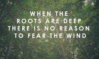 When the roots are deep there is no reason to fear the wind.
