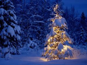 Snow-Laded-Christmas-Tree