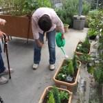 園芸療法の効果。片麻痺のひとへのアプローチ