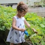 園芸療法の効果は奇跡でも偶然でもない。