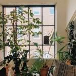 真夏の園芸療法プログラム;置くだけでストレスフリー、仕事がはかどる!3つの観葉植物