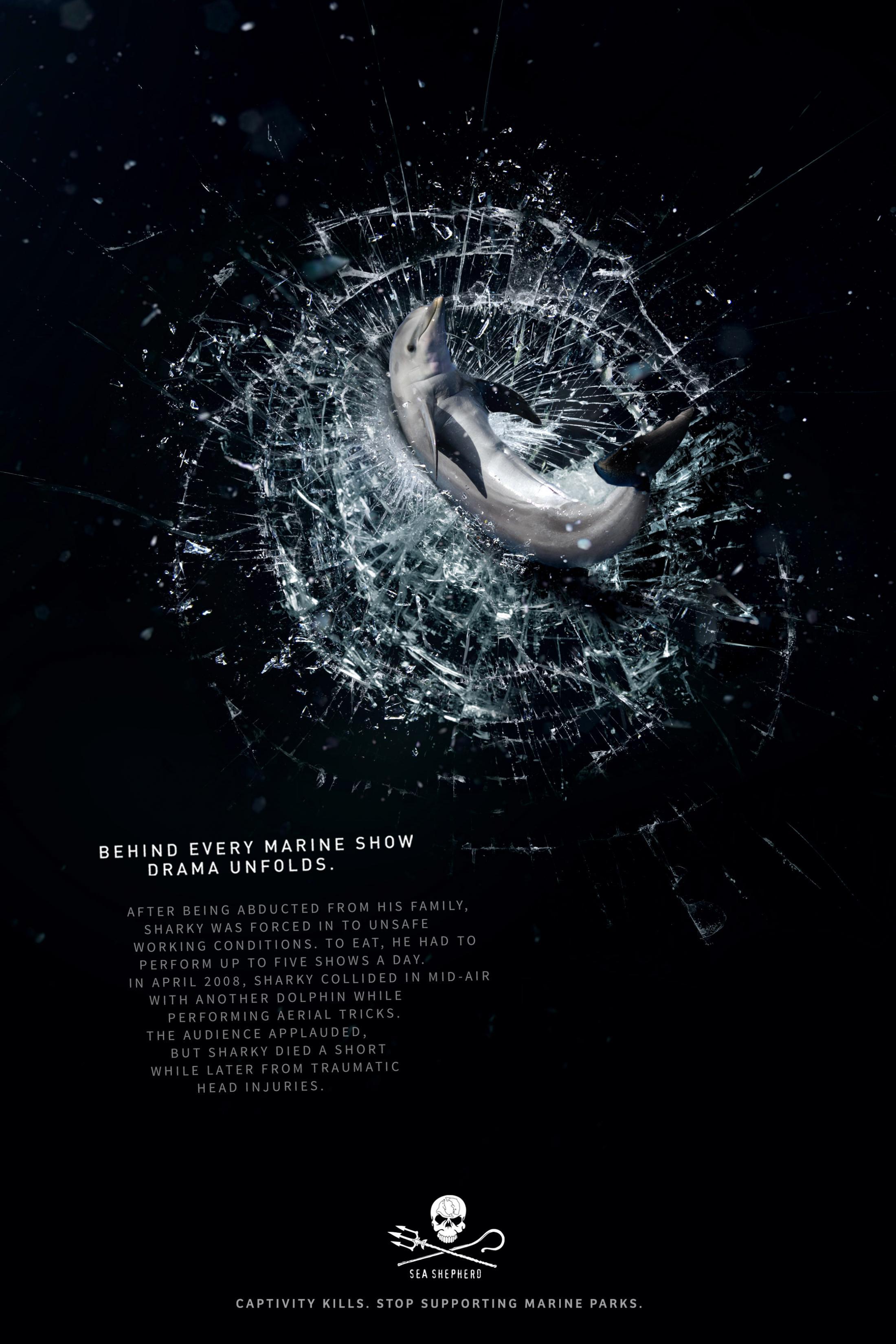 Sea Shepherd Conservation Society Print Advert By : Sharky ...