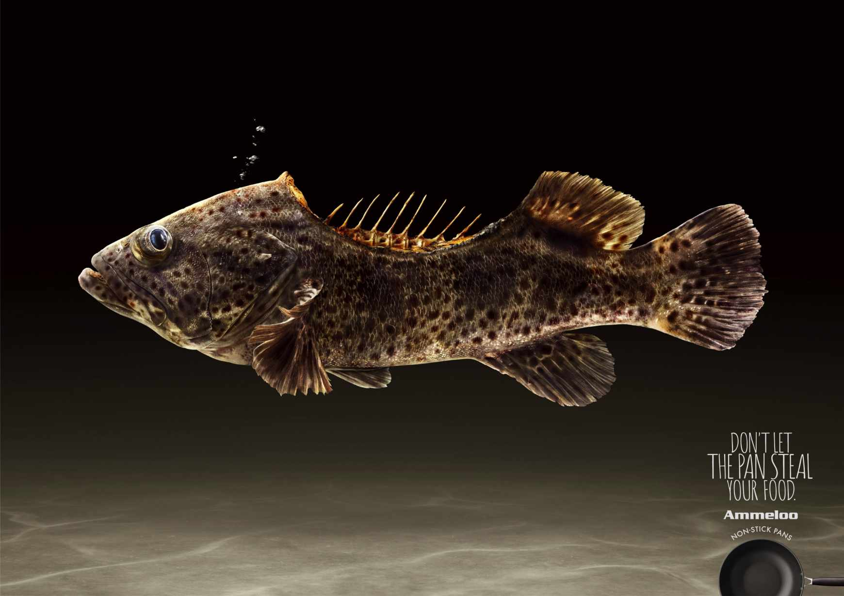 Ammeloo Print Ad - Finless Grouper