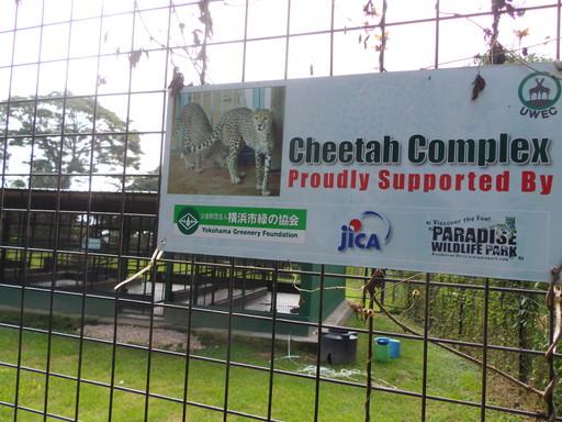 Cheetah Complex