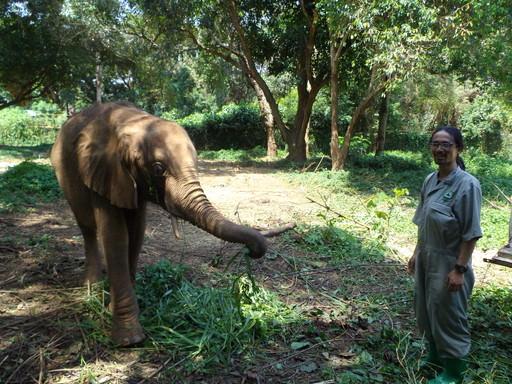 Elephant Area