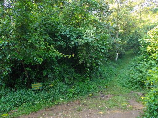 Rushara Hill Start