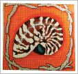 chambered nautilus needlepoint