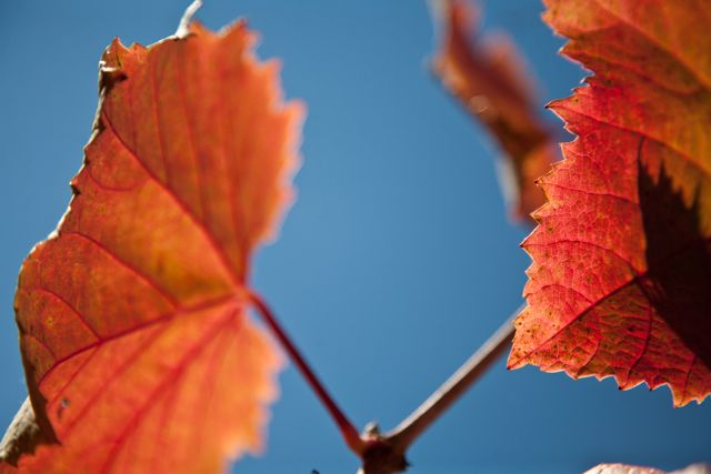 Red Leaves by Tim Carl