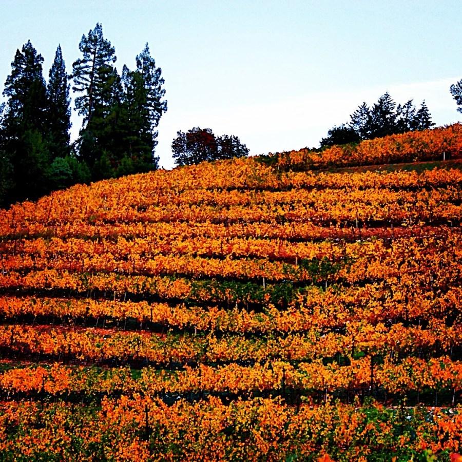 Orange Fall by Tim Carl
