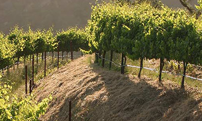 Napa Valley Soils and Geology
