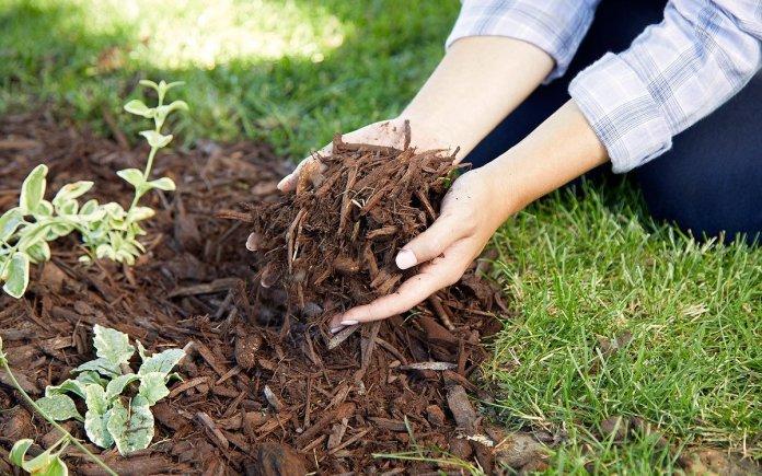 5 питань про доцільність мульчування ґрунту