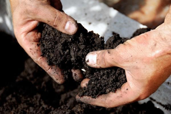 Как бороться с щелочной почвой?