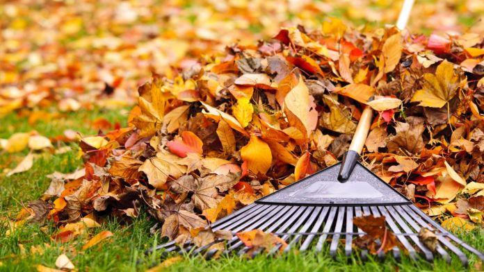 Опале листя: спалювати чи ні?