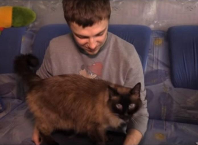 Украинский кот-долгожитель отметил свое 20-летие