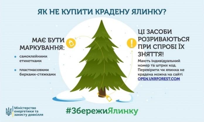 Как не купить ворованное дерево к новогоднему празднику?
