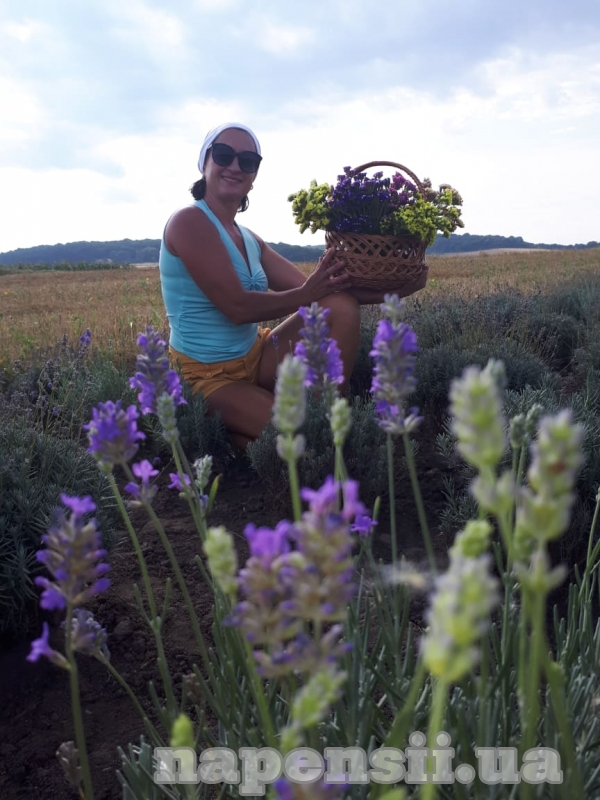 Жительница Тернопольской области выращивает лавандовое поле