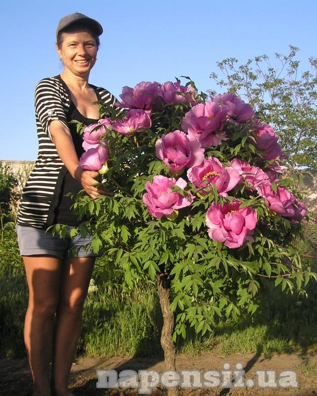 Одесситы выращивают туберозу и урожайные сорта винограда